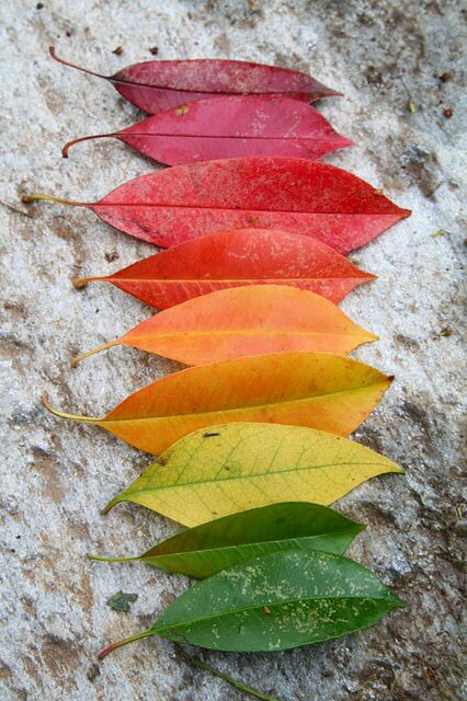 Many Coloured Leaves